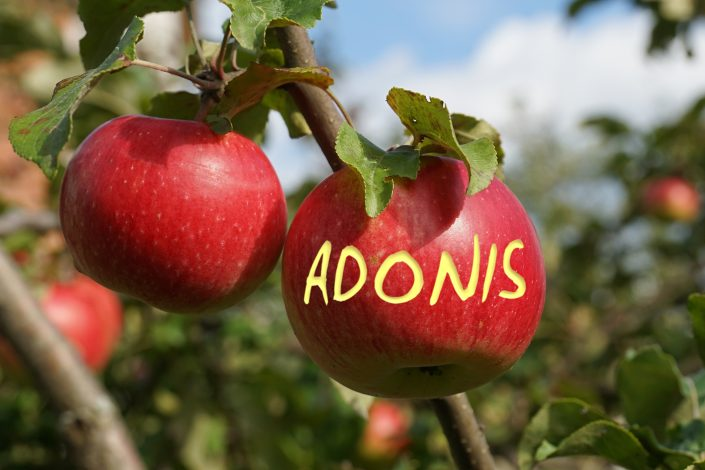 Apple02 Adonis