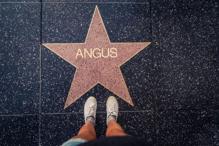 HollywoodStar Angus