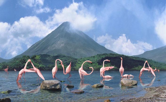 10653 Flamingos