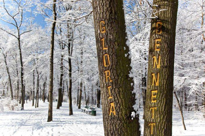 10791 WinterTrees