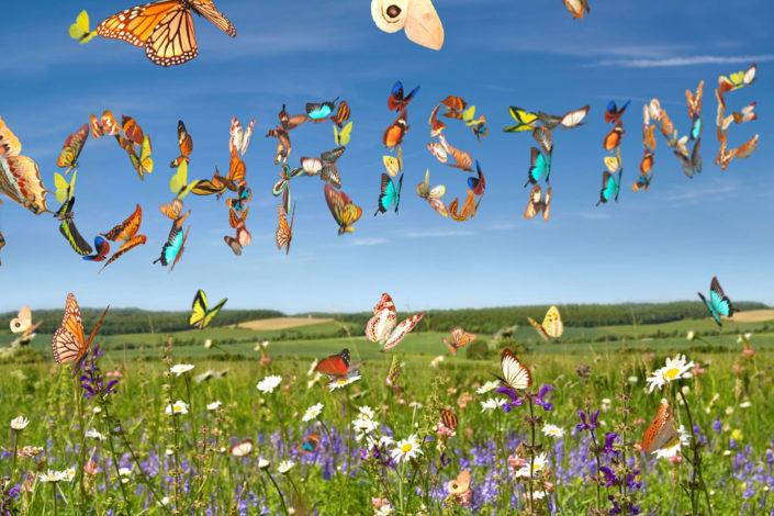 10889 ButterflySky